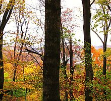 Autumn At Sleeping Bear Dunes, Michigan by artwhiz47