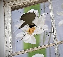 Window Of Opportunity by Jessica Manelis
