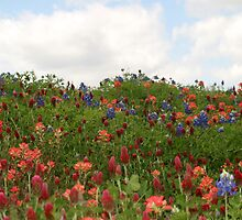 Hilltop Flowers And Clouds by Carolyn  Fletcher