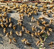 bees on a kerb by davejw
