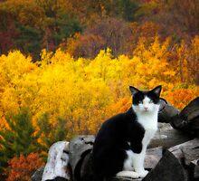 Kitty by Shelley Neff