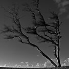 Prevailing Westerly Winds by Mark Iocchelli