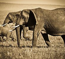 Baby Elephant Walk by Jill Fisher