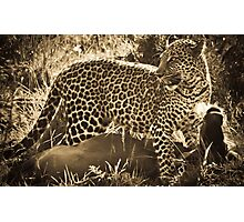 Leopard Lunch Photographic Print