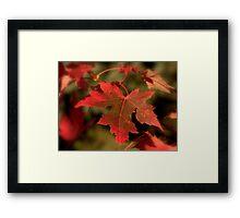 Fall Red Framed Print