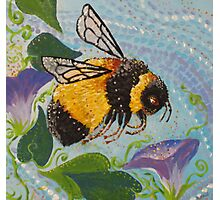 Miss Bumble Photographic Print