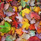 Autumn Leaves by AnnDixon
