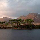 Pine island Derryclare Lough. by MickBourke