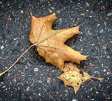 Fallen by Carina514