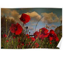 Poppy Field 2 Poster