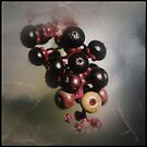 berry collection by Jill Auville