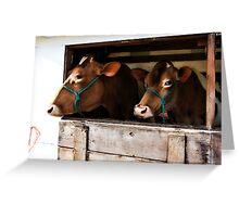 Golden Girls (Guernsey) - Fryeburg Fair 2011 Greeting Card