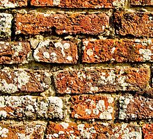 Brick Wall iPhone Case by Country  Pursuits