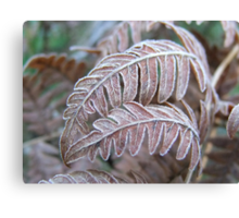 Frosted Ferns Canvas Print