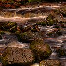 Campsie Glen (1) by Karl Williams