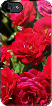 I-Phone:  Roses by Holly Runyon