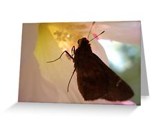 SKIPPER IN CONFEDERATE ROSE Greeting Card