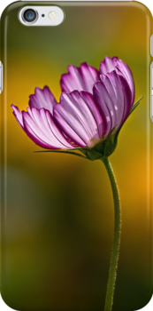 Cosmos on gold - iPhone case by Celeste Mookherjee