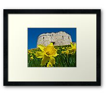 Daffodils by Clifford's Tower, York Framed Print