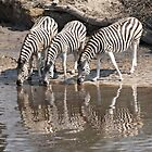 Three zebras by Anthony Brewer
