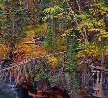 Canada. Canadian Rockies. Jasper NP. Maligne Canyon. Fall Colors. by vadim19