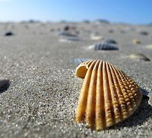 Shell by kevinjconnolly