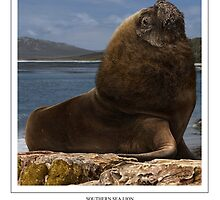 SOUTHERN SEA LION Otaria flavescens (DIGITAL PAINTING NOT A PHOTOGRAPH) by DilettantO