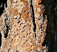 Bark Work by Helen Vercoe
