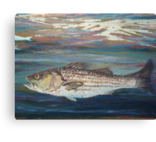 Striper Canvas Print