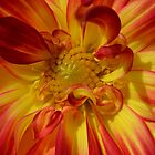 Dahlia at Manito by Kate Farkas
