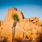 Joshua Tree National Park by Chris Rusnak