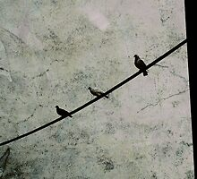 Birds on a Wire  by anjafreak