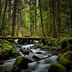 On It's Own Time by Charles & Patricia   Harkins ~ Picture Oregon