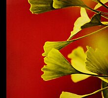 Vivid Ginkgo iPhone case. by Todd Rollins
