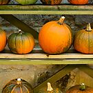 Harvest Display by Anne Gilbert