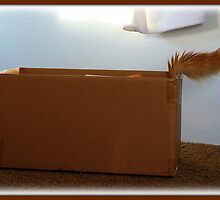 Can You Guess who's in this box?? by AngieBanta