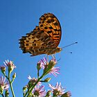 Butterfly Perch by Richard H. Jones