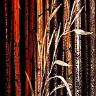 Tall Bamboo...IPhone Case by © Janis Zroback