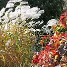 Autumn Grasses and Leaves by kenspics