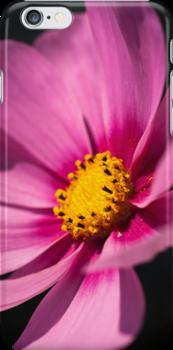 Cosmea iPhone Case by Karen Havenaar