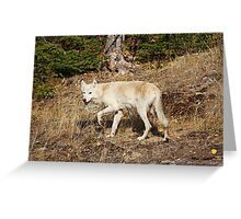 My First Timber Wolf2 Greeting Card
