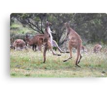 Kangaroos tail standing Metal Print