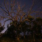 Dead Tree at Night by bloke28