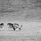 Deer Grazing by Ms-Bexy