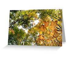 Fall Colours - Sharbot Lake Ontario Greeting Card