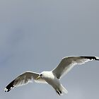 flight of the gull by Teka77