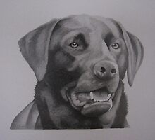 Lincs - Black lab by Susan Hewson