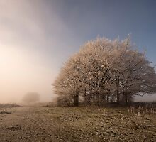 Misty Morn by Anne Gilbert