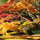Autumn Acer Glade by John Dalkin