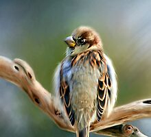 English Sparrow - Designer iPhone 4-4S Case by Renee Dawson